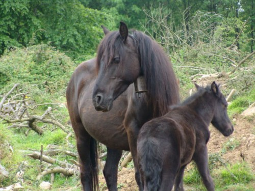 otro-caballo